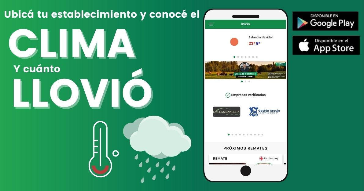 Banner clima app
