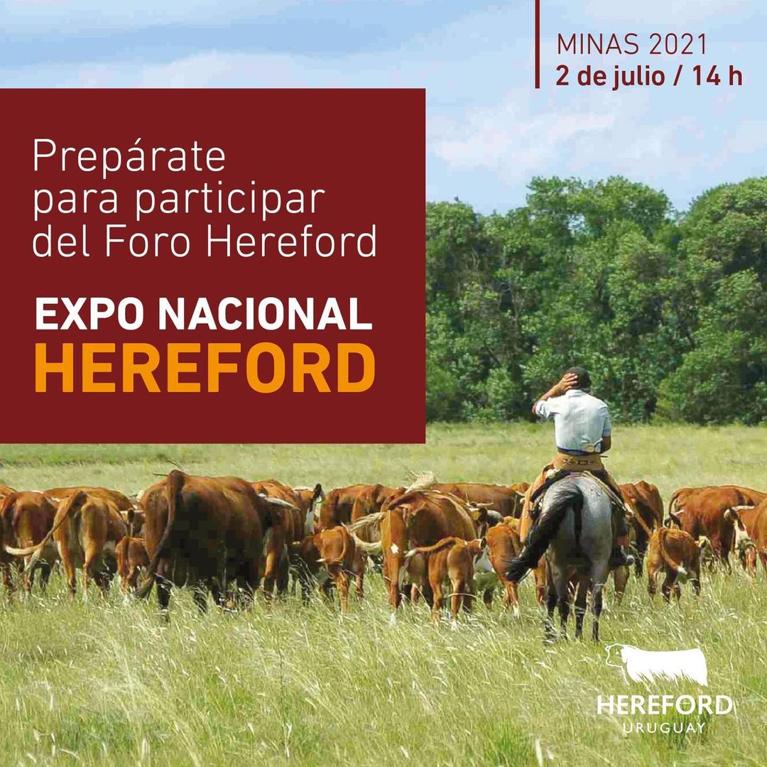 Foro Hereford