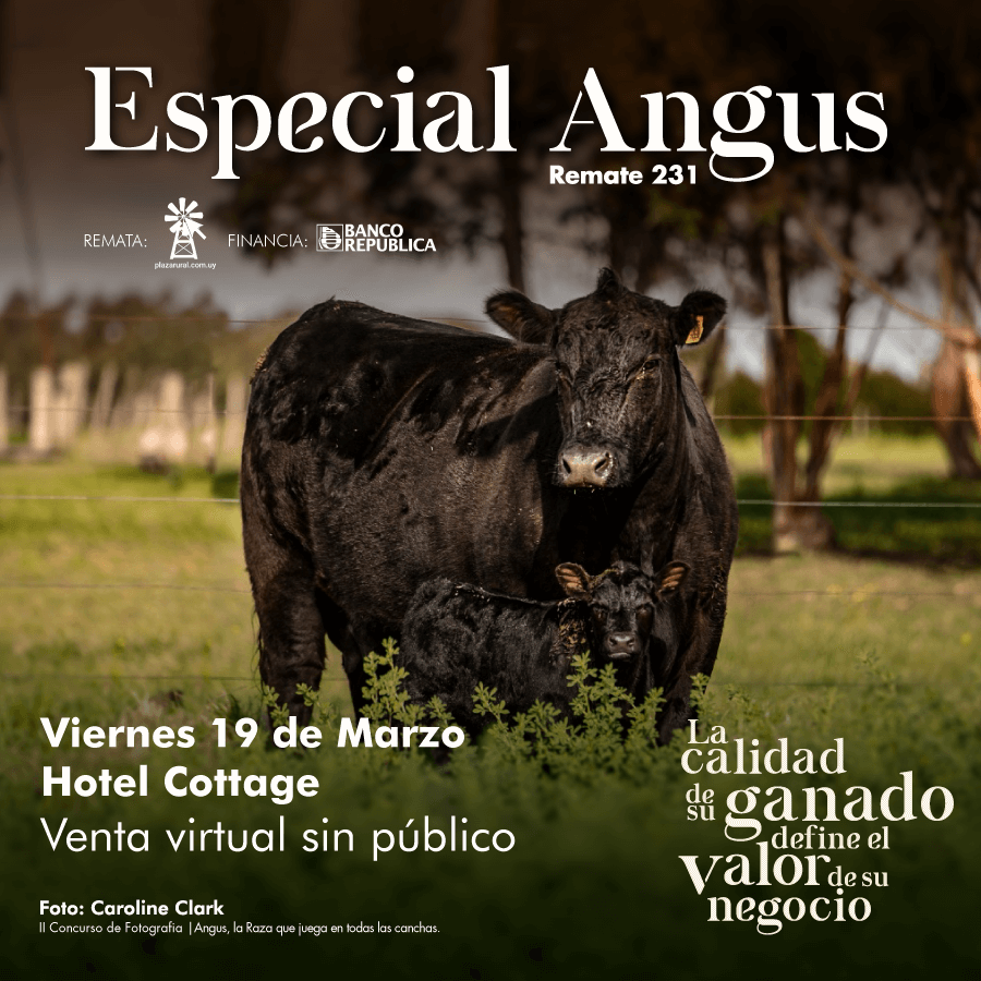 Afiche 231º remate Plaza Rural (Especial Angus)